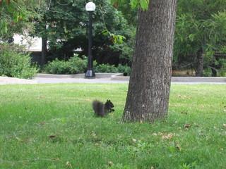 Un écureuil dans le parc Major's Hill - Ottawa