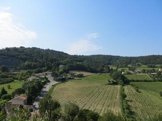 Champ de vignes - Vaison-la-Romaine